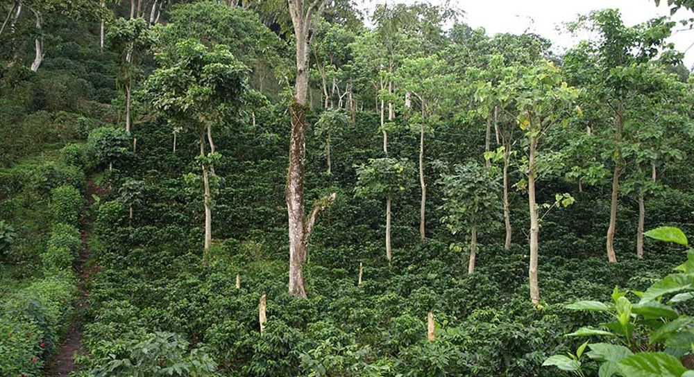 Urwald in Guatemala